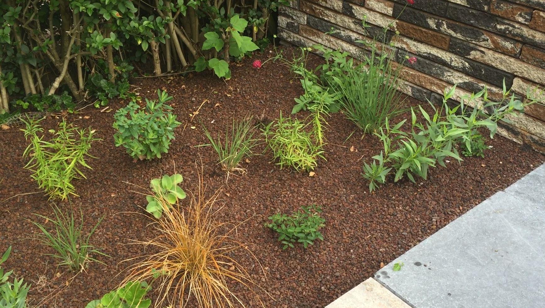 prairie tuin, onderhoudsvriendelijke tuin, hovenier vlaardingen